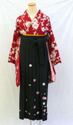小振袖・袴フルセット「赤地にはんなり八重桜」